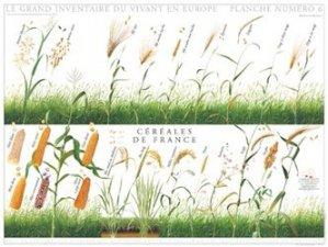 Céréales de France