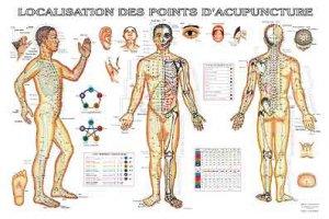 Planche de localisation des points d'acupuncture-phu-xuan-2224489793675