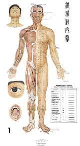 Planches d'acupuncture des 14 méridiens-phu-xuan-2224489802902