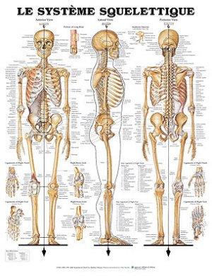 Planche du système squelettique-phu-xuan-2224490650813