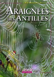Araignées des Antilles