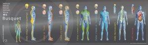 Chaînes musculaires