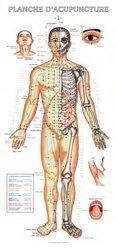 Planches d'acupuncture des 14 méridiens