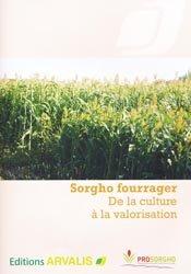 Sorgho fourrager