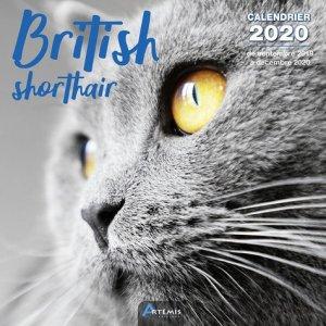 British shortair - artemis - 9782816015232