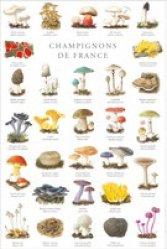 Champignons de France - gulf stream  - 2225186151966
