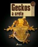 Geckos à crête