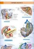 L'appareil digestif 2