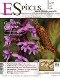 Orchidées et Aracées, ces fleurs qui dupent leurs pollinisateurs