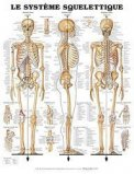 Planche du système squelettique