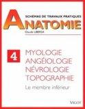 Sch�mas de travaux pratiques anatomie 4 Myologie, ang�iologie, n�vrologie, topographie